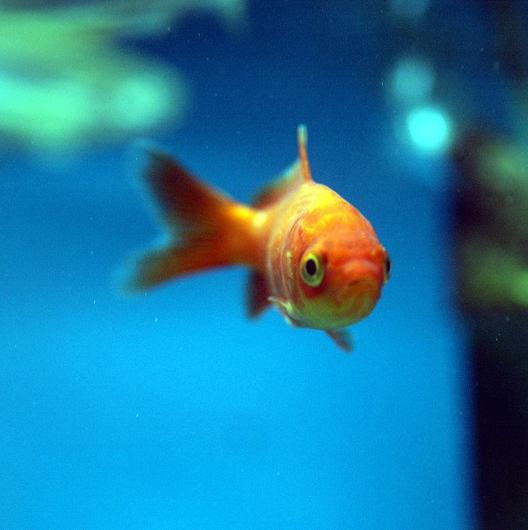 HMRC said someone cited mourning for their dead goldfish as a reason for a late tax return