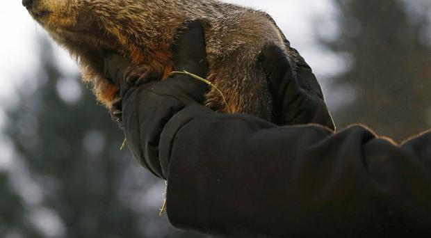 Is it Christmas or Groundhog Day? 2014 is just days away - will we get Haass deal? Pictured: Groundhog Punxsutawney Phil