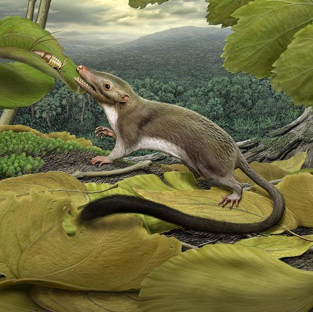 An artist's impression of the earliest ancestor of most mammals living today, including humans (Carnegie Museum of Natural History/PA)
