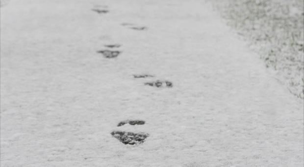 Officers spotted a distinctive footprint in the snow and followed the tracks down alleyways and back lanes