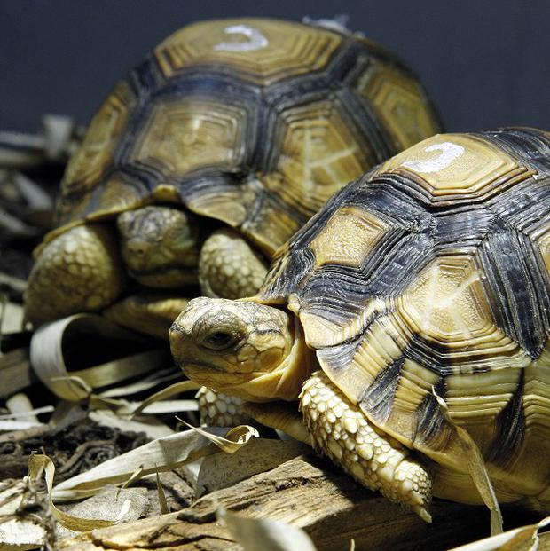 Two tortoises are thought to have started a fire that destroyed a conservatory in Stockton-on-Tees