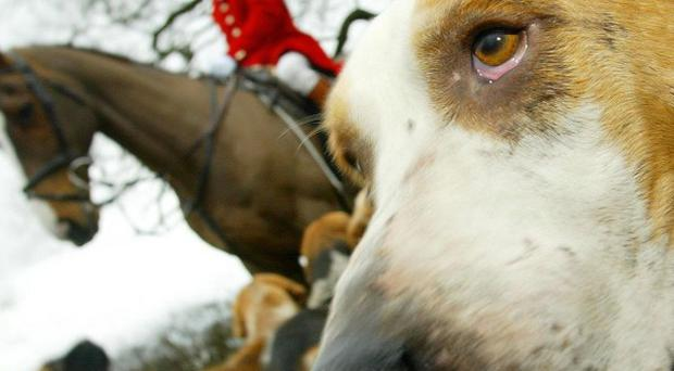 The League Against Cruel Sports wants to catch people hunting illegally