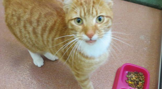 Tigger was found 130 miles away from home following a trip in the back of a van