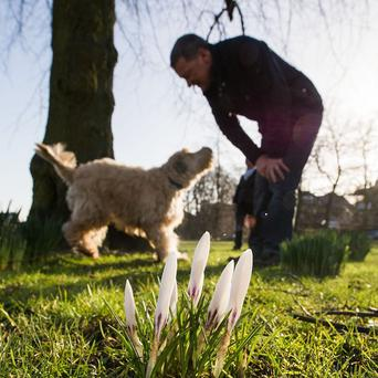 One in five owners said they rearranged their social plans because of their pets