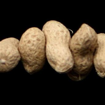 Supermarket chain Booths has withdrawn its Whole Hearted Roasted Monkey Nuts because the label does not say the packet contains peanuts