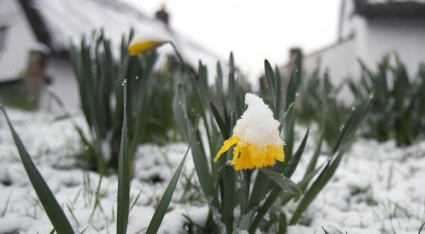 Snowfalls in late March turned this usually spring-like scene into something more wintry