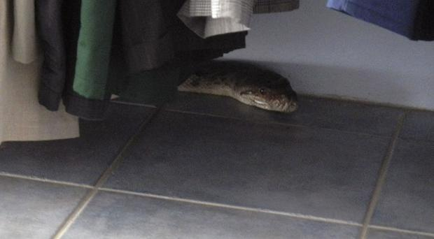 Police called a snake catcher, who hauled the reptile away (AP/Queensland Police)