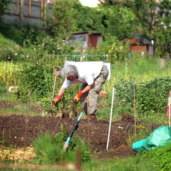 A poll found 80 per cent of gardeners feel satisfied with their lives