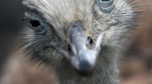 Pc Fiona Wilson warned the rhea could be dangerous to anyone who does not know how to handle it correctly