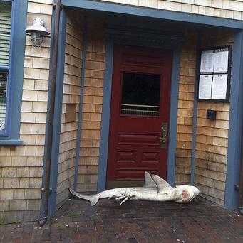 A dead shark was found blocking the front door of a Nantucket pub (AP/Jimmy Agnew)