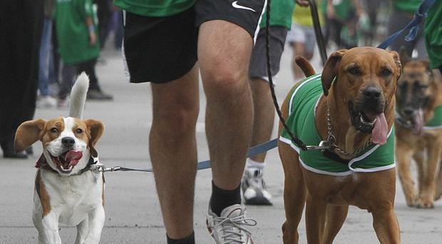 Dogs run with their owners during a race marking Peru's national pet day in Lima (AP)