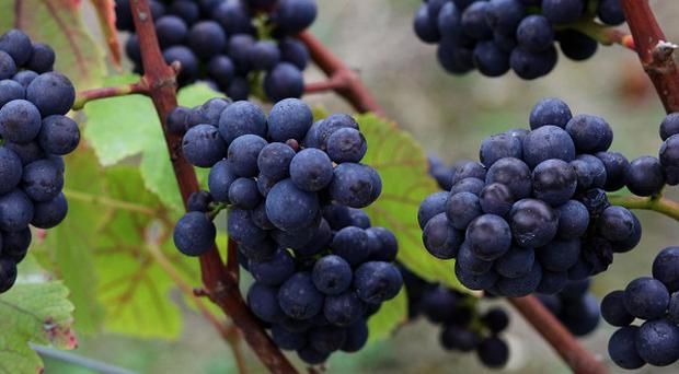 A man has died after being crushed by five tonnes of grapes in Spain