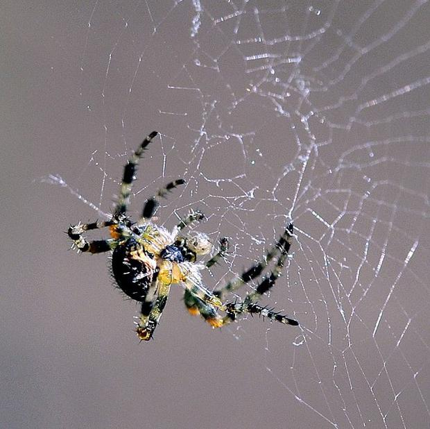 A quarter of children said they were scared by spiders and bugs