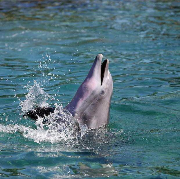 A dolphin delivered a marriage proposal to a British woman swimming with them at Discovery Cove in Orlando