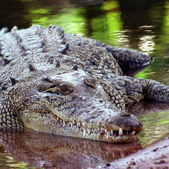 A British man was attacked by a crocodile while playing golf in Mexico
