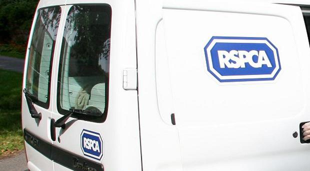 Residents said they have contacted the police and the RSPCA about Shiny following several incidents