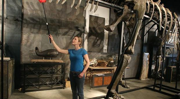 A dinosaur skeleton will be auctioned today.