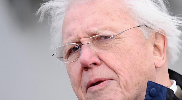 Sir David Attenborough was caught out when he slipped up in identifying the song of a common British bird