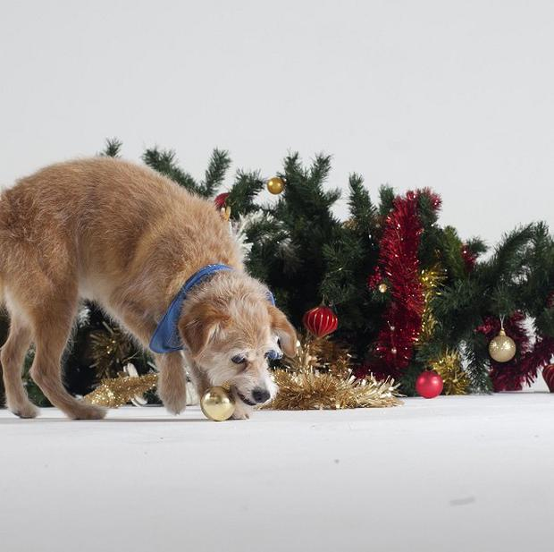Pet owners have been warned about the dangers of small festive decorations
