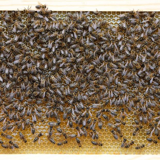 Thieves have stolen a hive containing thousands of hibernating bees.