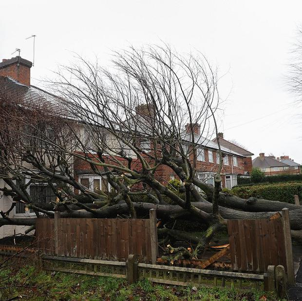 A fallen tree lies against a house in Kingstanding, Birmingham after being brought down by high winds