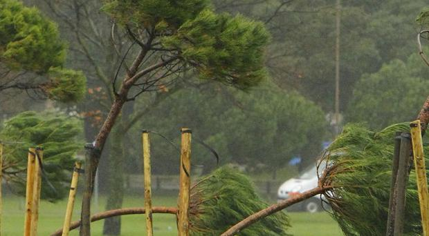 The tree came down as strong winds battered the country on Christmas Eve