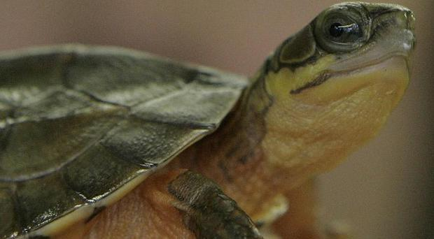 Burglars stole a pet turtle from its tank