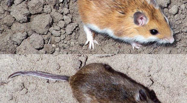 Dead mice have been found in a Poundstretcher