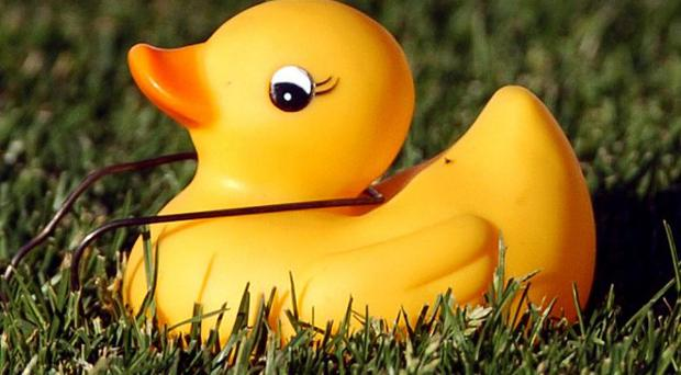 Rubber duck racing will soon be legal in the US state of Wisconsin (AP)