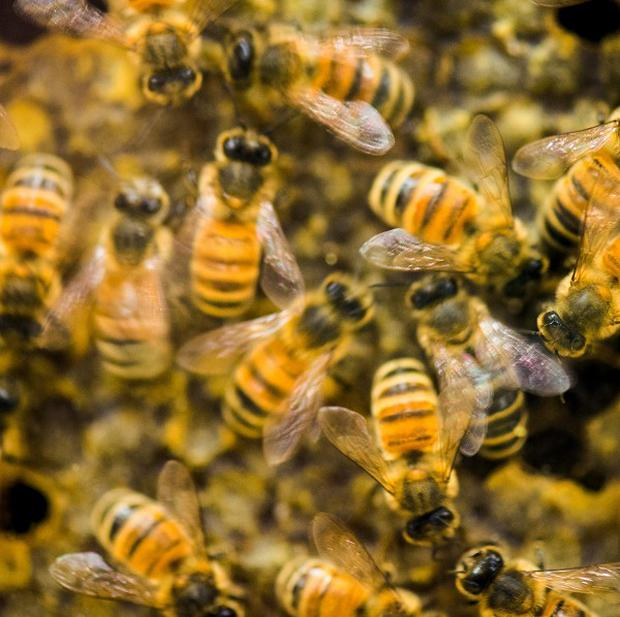 A woman is expected to recover after bees stung her about 1,000 times