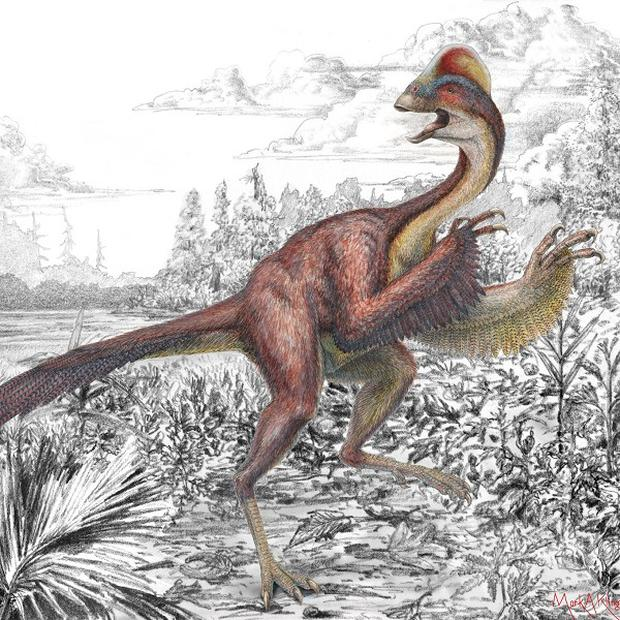"Undated handout artist impression issued by the Carnegie Museum of Natural History of Anzu wyliei, a bird-like dinosaur nicknamed the ""chicken from hell"", that roamed the Dakotas 66 million years ago"