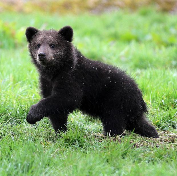 An escaped bear cub has caused a zoo in the US to be evacuated