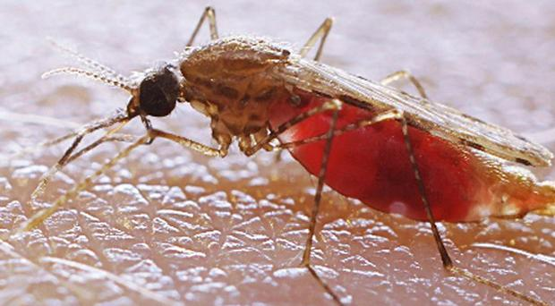 Fans have been warned about bugs that can spread diseases like malaria
