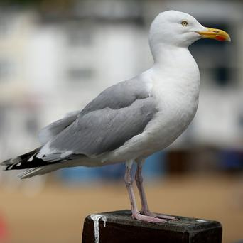Fears about dive-bombing seagulls have forced a charity abseil to be delayed