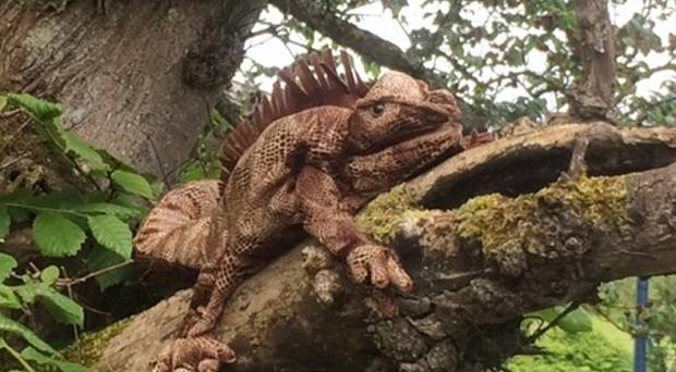 A woman spotted what looked like a lizard in a tree near Miller Academy in Thurso in the Highlands (Scottish SPCA/PA)