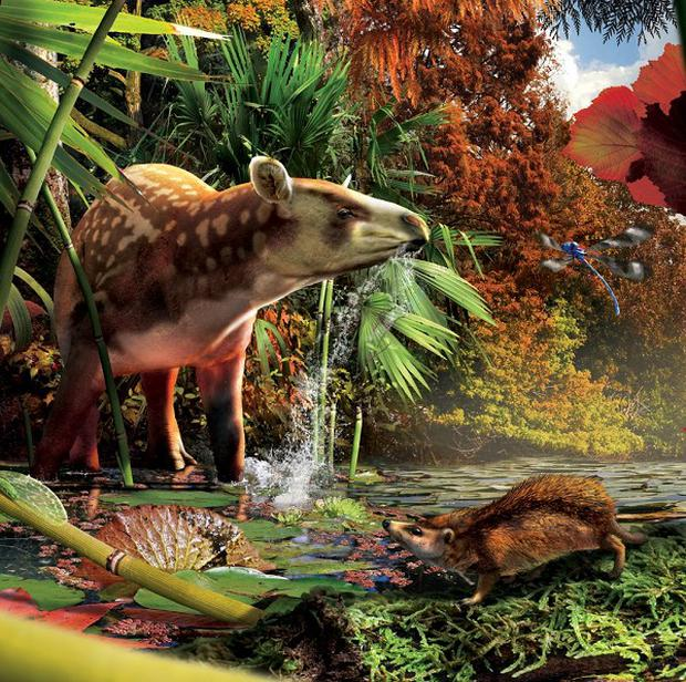 An image of a thumb-sized Silvacola hedgehog pictured with the tapir-like Heptodon (Julius T Csotonyi/Society of Vertebrate Paleontology/PA)