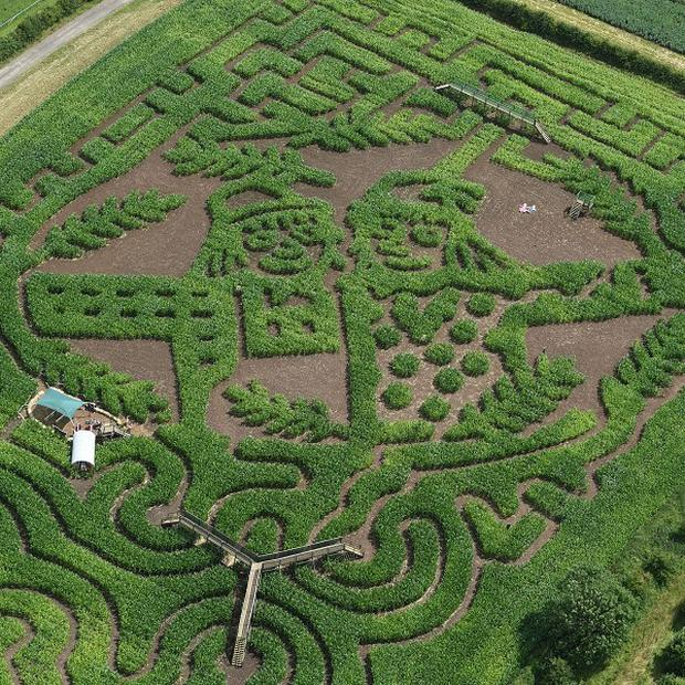 A maize maze featuring Betty O'Barley and Harry O'Hay, characters from Julia Donaldson's latest book The Scarecrow's Wedding