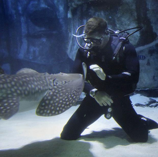 Shark Trust patron and wildlife TV presenter Steve Backshall swimming with sharks