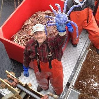 Crab fisherman Frank McFarland holds up a rare blue-coloured red king crab he caught in his commercial crabbing pots in Nome, Alaska (AP/Alaska Dept of Fish and Game)