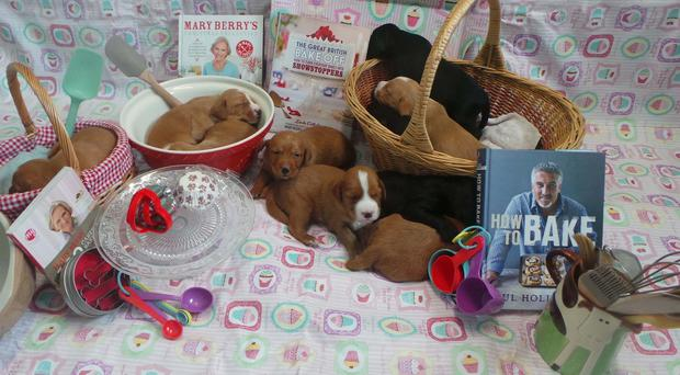 A litter of puppies that the Dog's Trust gave names inspired by the Great British Bake Off