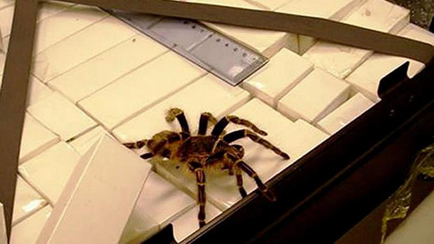A stowaway spider has been rehomed