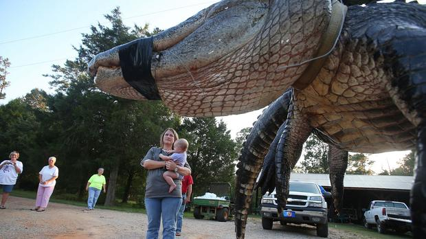 Mandy Stokes stands with her daughter Molly Kate next to a large alligator caught in Alabama (AP)