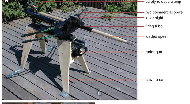 An experiment used a crossbow to test stone-tipped and sharpened wooden spears by firing them into gelatin. (Jayne Wilkins, Benjamin Schoville, Kyle Brown/Arizona State University/PA)
