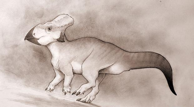 An artist's impression of a dog-sized horned dinosaur which roamed eastern North America up to 100 million years ago