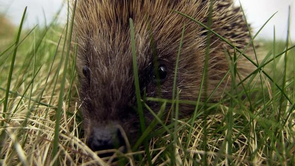 The theme for this year is hedgehogs as the grand opening falls during Hedgehog Awareness Week