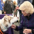 The Duchess of Cornwall with Max the husky