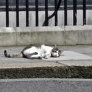 Larry the cat in Downing Street has reportedly been fighting with Palmerston from the Foreign Office