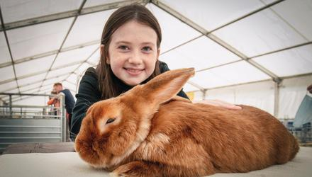 Grace Wright 11 from Castlewellen. Red Satin Rabbit at the first day of the Balmoral Show. Picture Colm O'Reilly Belfast Telegraph. 22-09-2021