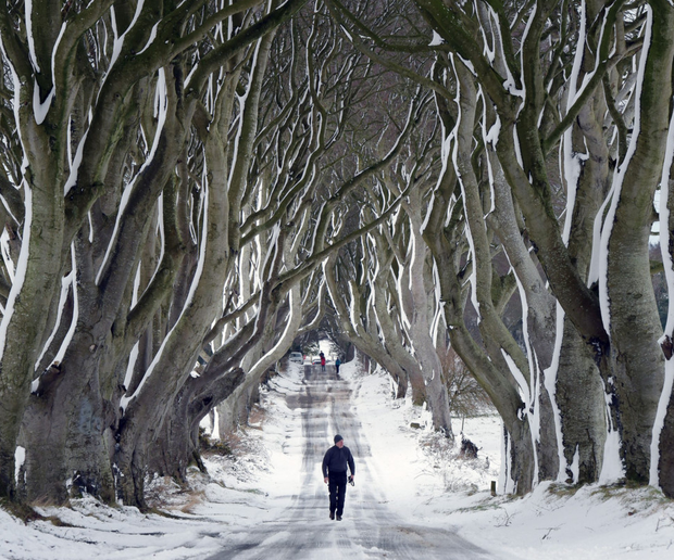 The Dark Hedges - one of the locations in Game of Thrones