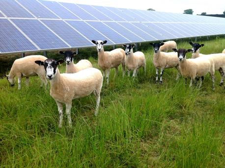 Northern Ireland's first solar farm has been opened at Crookedstone Farm near Belfast International